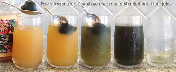 Spirulina frozen in cubes can be stored in a freezer and melted into juices for a green drink.