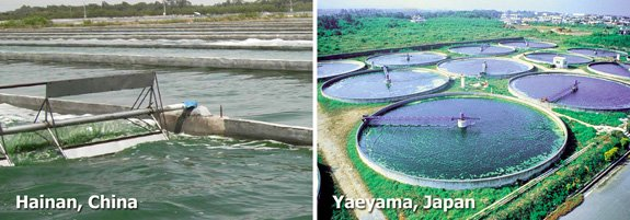 Some of the largest Chinese spirulina farms are on Hainan Island.  Yaeyama on Okinawa Island, Southern Japan grows chlorella algae in circular ponds.