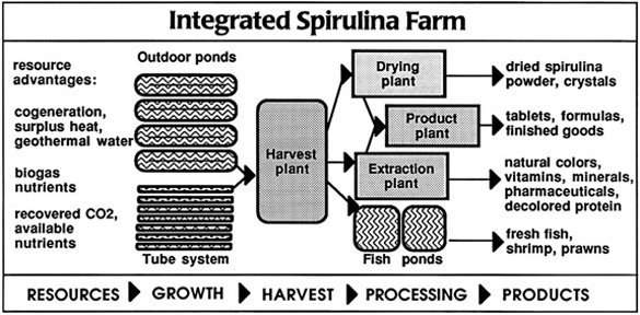 Integrated Farm