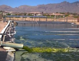 The UA's Algal Raceway Integrated Design, or ARID, system.