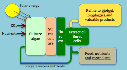 Algae Biofuel Production