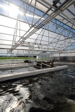 Algae raceway pond at Cedar Lane Farms. – K.D. Chamberlain image, Ohio State University, OARDC