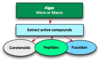 Algae-based Medical Compounds