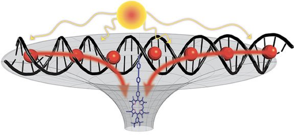 "An artificial light-collecting antenna system. Binding a large number of light-absorbing molecules (""red balls"") to a DNA molecule, which is then modified with a porphyrin unit (blue) will result in the creation of a self-assembling system that resembles light harvesting in natural photosynthesis."