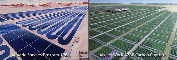 Artist conceptions of large algae biofuel farms