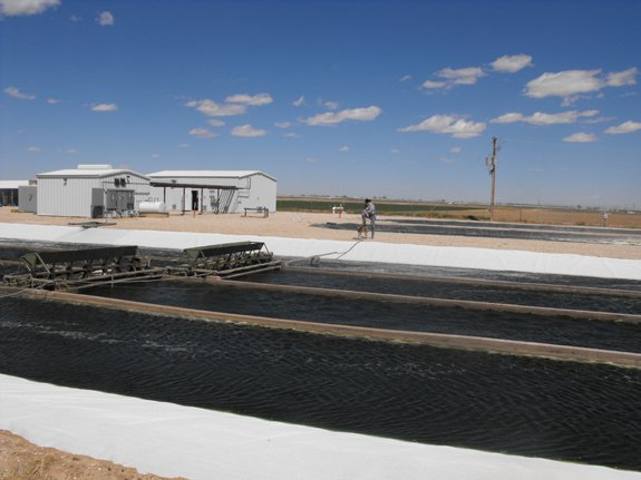 One of CHEMM's algae ponds in Southern New Mexico