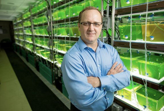 """People have suggested that species diversity might increase the efficiency of algal biofuel systems, but nobody has set up the experiments to test it directly. These will be the first experiments to systematically manipulate the number and types of species in the system to determine how to maximize the yield and stability of algal biofuel."" —Bradley Cardinale"