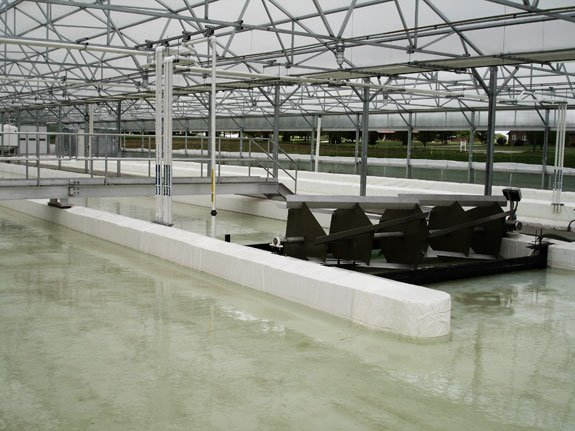Next to a commercial nursery and greenhouse operation on the outskirts of Wooster, Ohio, a Nexus greenhouse covers two 30-by-200-foot raceway ponds at Cedar Lane Farms.