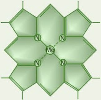Chlorophyll's simple structure