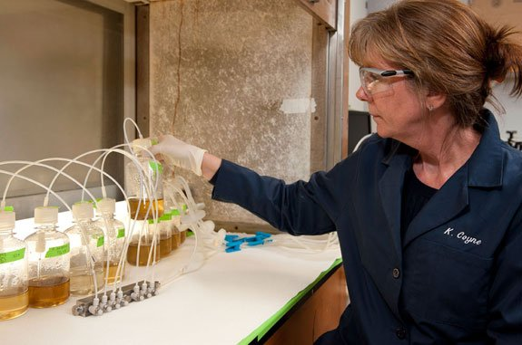Kathryn Coyne is growing algae in her lab that could help cut power plant emissions and serve as a base ingredient for biofuel.