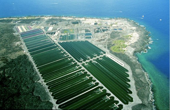Cyanotech's algae cultivation and production facilities in Kona