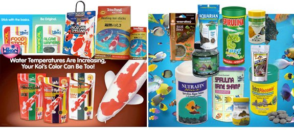 Popular fish foods for koi and colorfish and many aquarium foods contain spirulina.