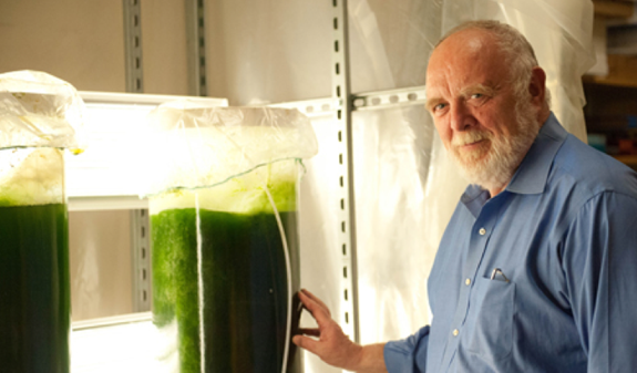 Robert Hebner, director of UT's Center for Electromechanics (CEM), conducts research in a large algae growth demonstration facility for biofuels.
