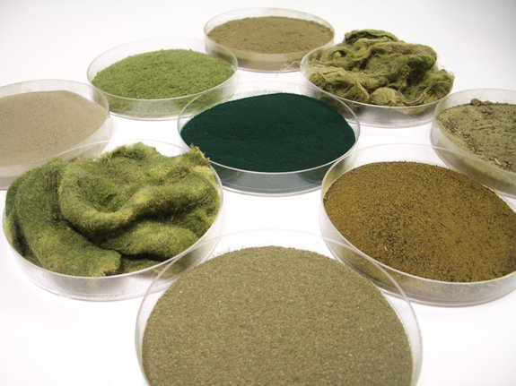 A variety of raw aquatic feedstocks, such as spirulina, periphyton, duckweed and diatoms.