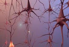 Omega-3s improve Neuron Signaling