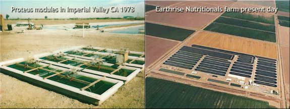 Small modules and ponds in 1978 launched Earthrise Nutritionals farm in Imperial Valley CA.