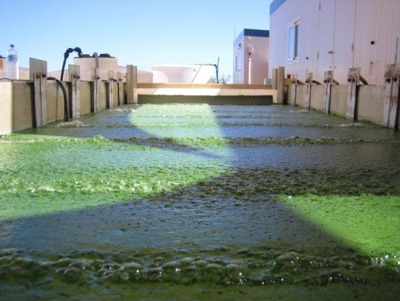 Muradel has developed low energy harvesting technology using electro-flocculation-flotation processes in a liquid constrained environment separating, algal biomass from recyclable substrates. Algae are grown in open raceway ponds using seawater.
