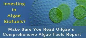 Oilgae—Investing in Algae Biofuels?