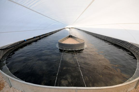 Qualitas' pilot studies validated algae farm technology for production of vegetarian omega-3 oil