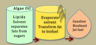 Refining Biofuels from Algae Oil