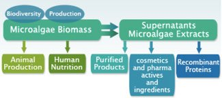 Roquette's view of the microalgal industry