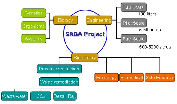Conceptual Framework of the SABA Project