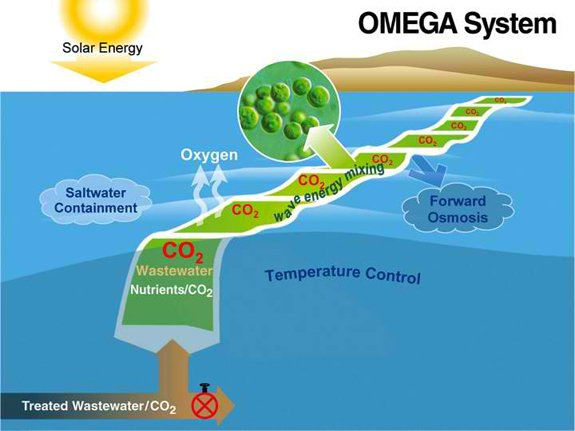 The OMEGA system: Treated wastewater from an offshore outfall and CO2