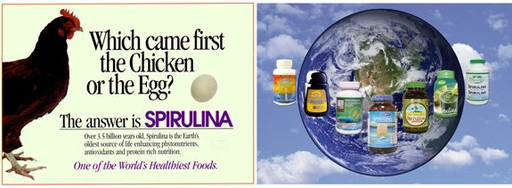 Marketing spirulina products around the world in over 40 countries.