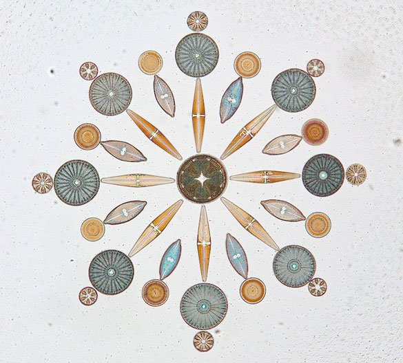 Diatoms to the rescue – photograph of diatoms arranged on a microscope slide  by W.M. Grant from the California Academy of Sciences Diatom Collection.