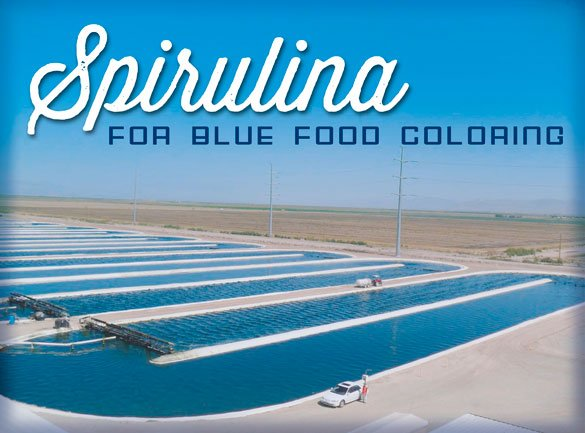 Earthrise to produce natural blue food coloring Algae Industry Magazine