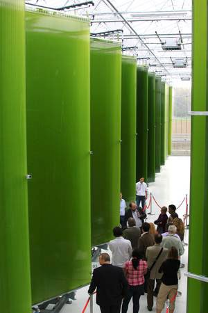 "Ecoduna's ""hanging garden"" photobioreactors developed in the Phobior project"