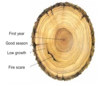 Tree rings record poor growth years,  that link to crop failure and war